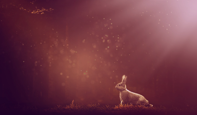The Innocent Hare